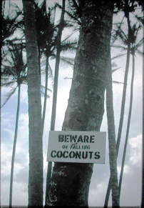 mitchell coconuts